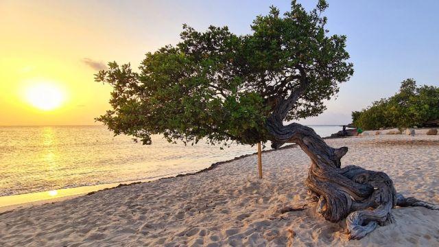 Divi Tree Eagle Beach Aruba
