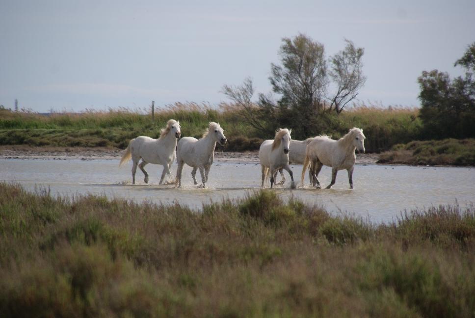 De paarden