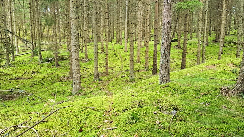 Wildspoor in het bos